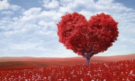 Yêu thương bản thân và bài học về sự linh hoạt, thong dong trong cuộc sống